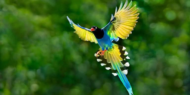 Las aves del paraíso, los pájaros más coloridos del mundo