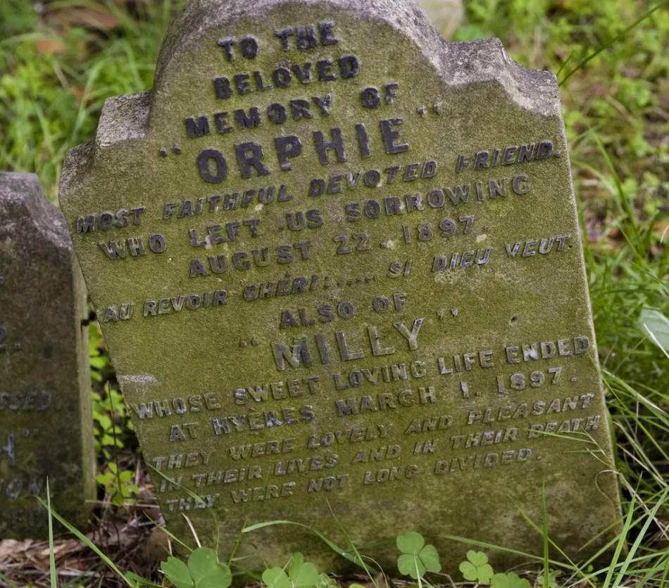 A la querida memoria de Orphie y también de Milly.