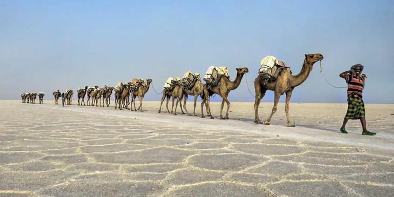 Caravana de camellos.