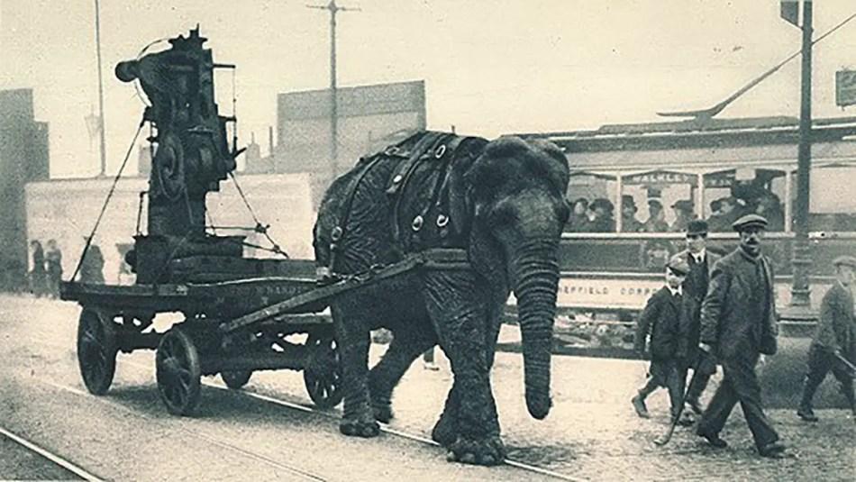 Los elefantes eran utilizados como animales de tiro.