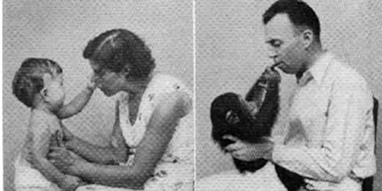 El Experimento Kellogg fue un experimento que bordeó los límites de la ética. Un científico que crió a su pequeño hijo junto a una chimpancé como hermanos.