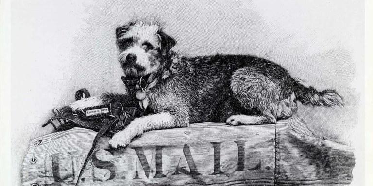 Owney, el perro viajero que recorrió los Estados Unidos en tren
