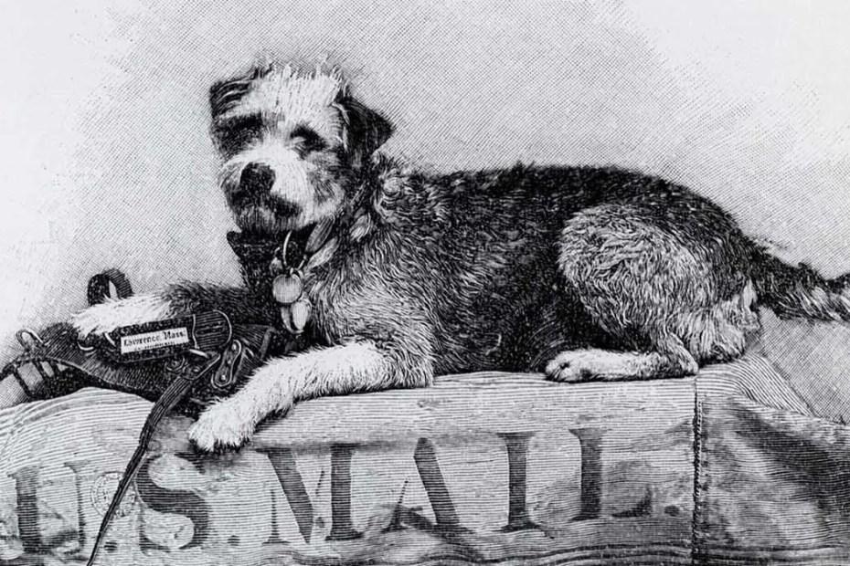 Owney el perro viajero. Durante el siglo XIX todos los Estados Unidos viajando en trenes del servicio postal y recolectando medallas durante sus viajes.