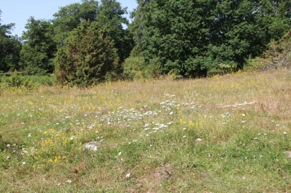 Skesta hage i sommarfager prakt IMG_5754