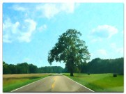 Driving the Natchez Trace