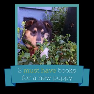 2 Must-Have Books for a New Puppy