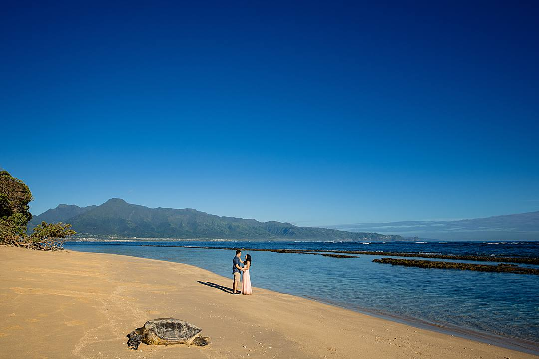 engagement photos on the beach with a turtle in maui