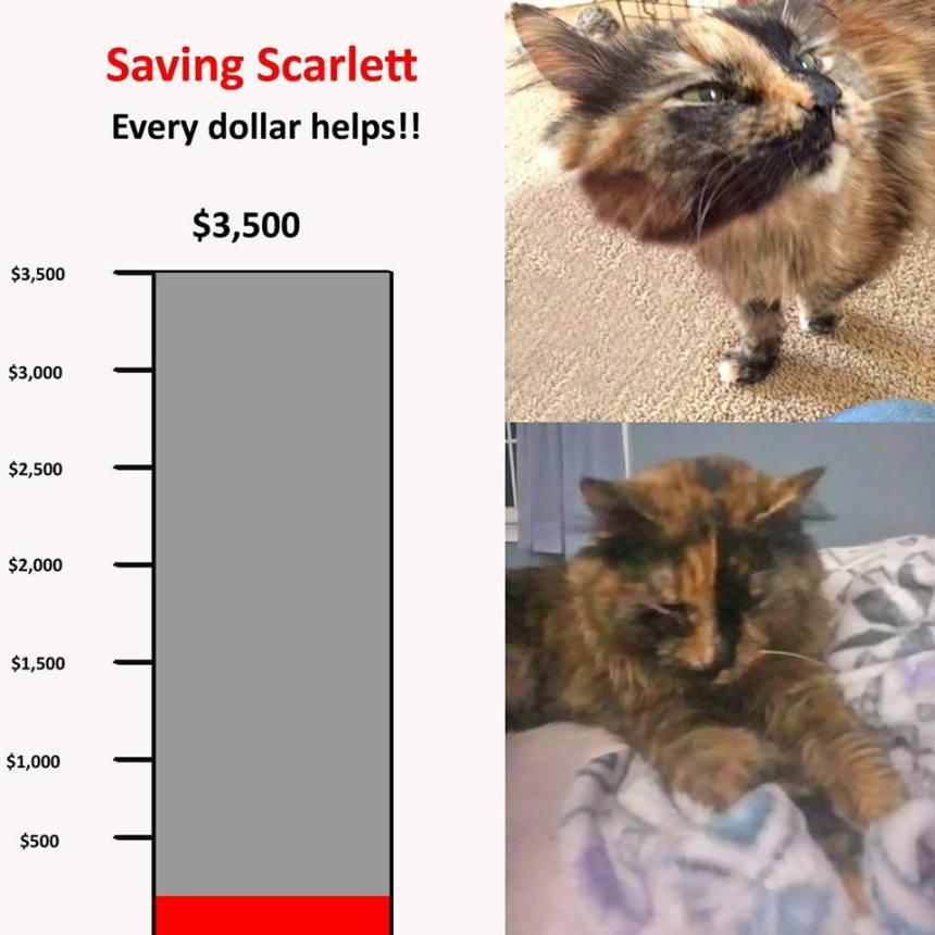 Save Scarlett