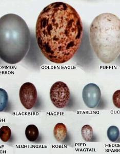 also wild bird eggs rh angelfire