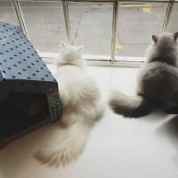 Maison de Moggy: cat cafe
