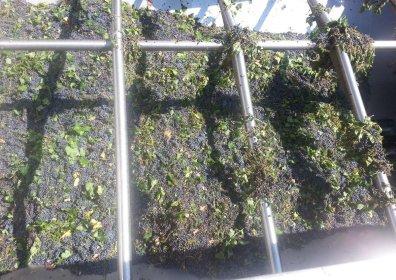 Come operiamo – Vini di alta qualità I.G.P. Puglia