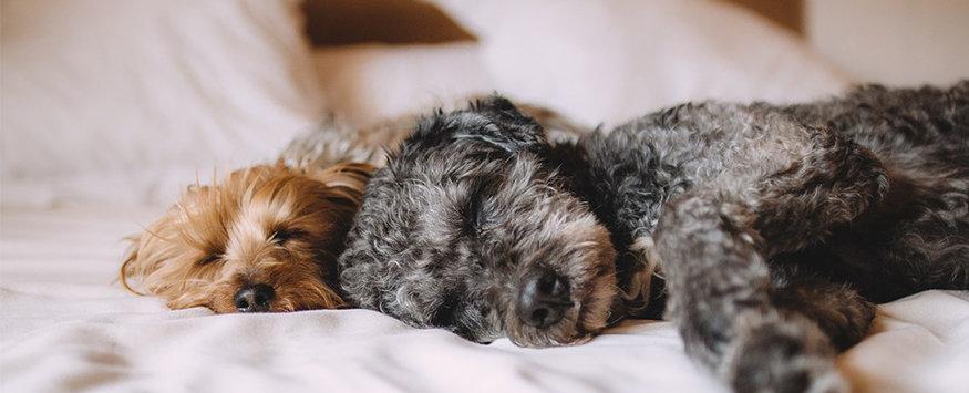 Dogs sleep