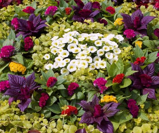 The Newport Flower Show