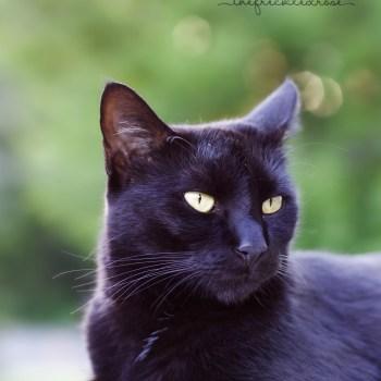 Black Cat Huntress