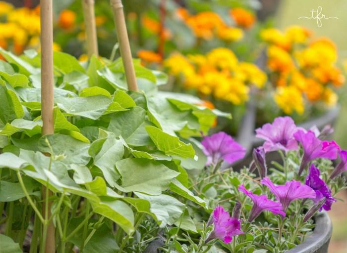 5 Steps For Veggie Garden Success All Season Long