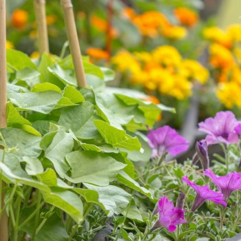 5 Steps To Veggie Garden Success