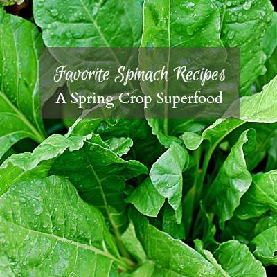 Favorite Spinach Recipes A Spring Crop Superfood - Hearth and Vine