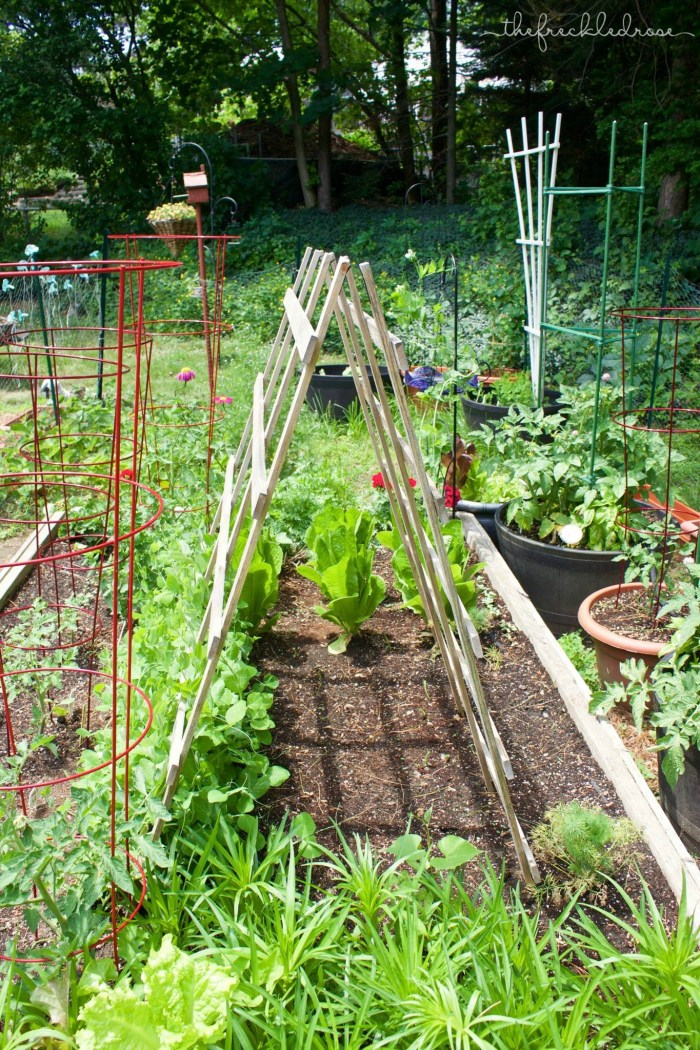 You can use a wooden or metal trellis. Instead of going for something tall and skinny, I would go for something wider that still has some height depending on how many plants you have. I have tried very small trellises, and it becomes a mess once your plants outgrow it. Make sure to check on the package before you plant, that way you know what size trellis you are looking for.