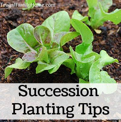 Succession Planting Tips - Frugal Family Home