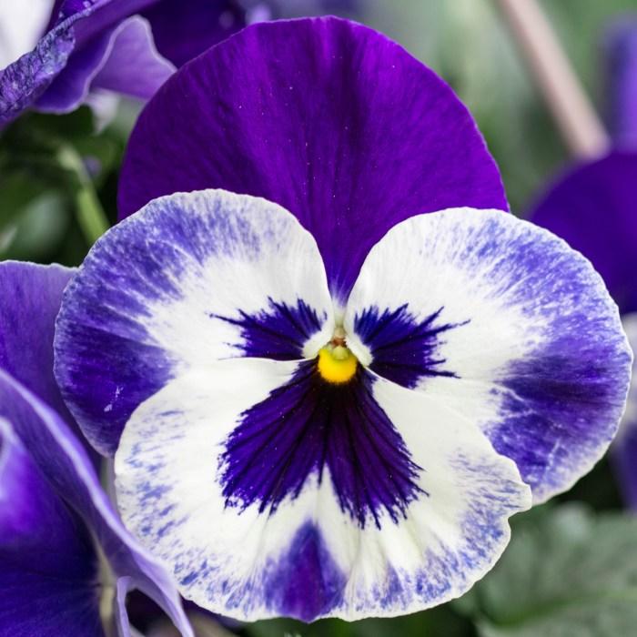 Tea Talk – April Showers Bring May Flowers
