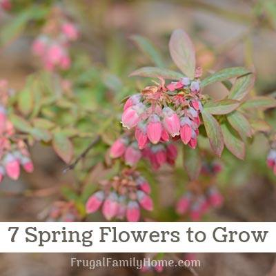 7 Spring Flowers to Grow - Frugal Family Home