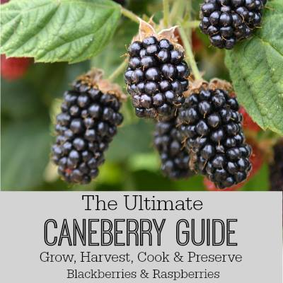 The Ultimate Caneberry Guide - An Oregon Cottage