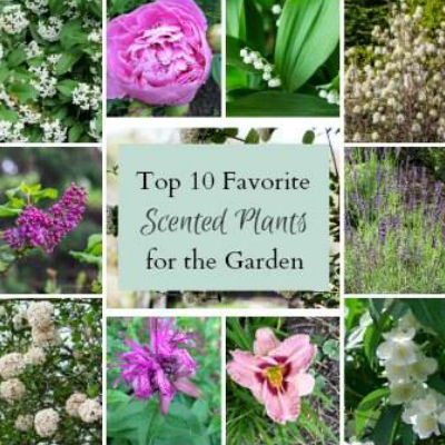 Top 10 Scented Plants for the Garden - Hearth and Vine