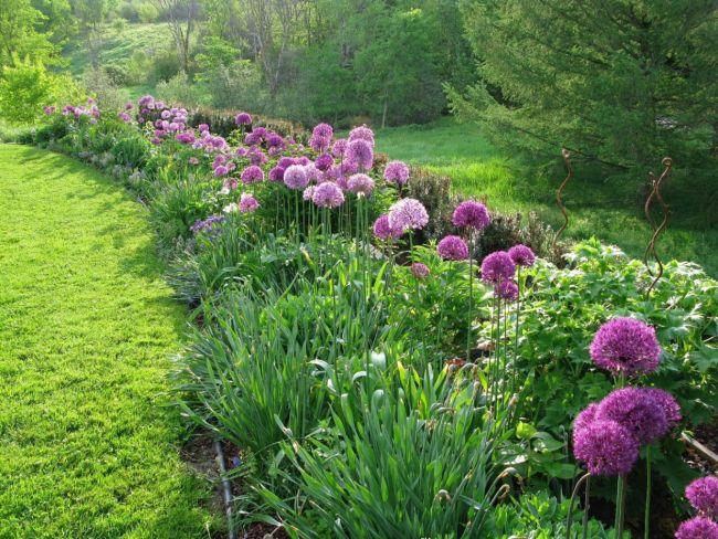Year Of The Allium | angiethefreckledrose.com