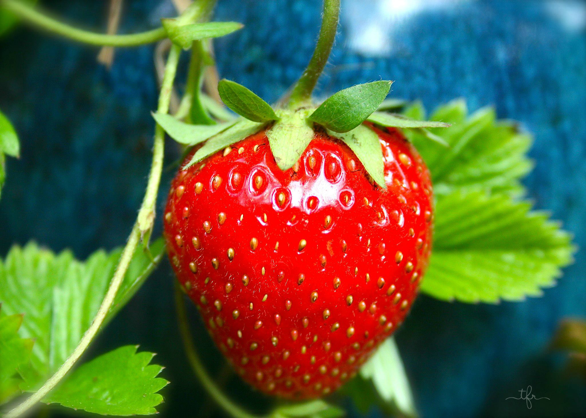 Interested in growing strawberries at home. How do you like this business idea 59