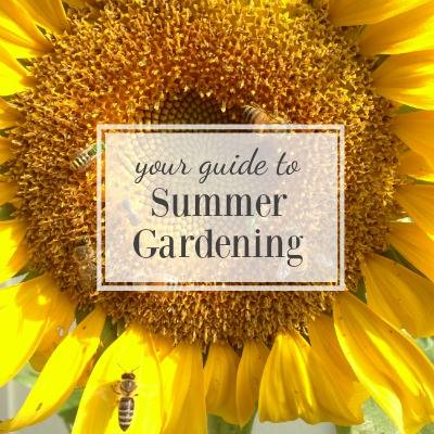 Your Guide to Summer Gardening - An Oregon Cottage