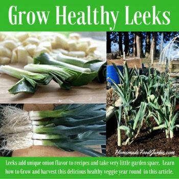 Grow Healthy Leeks - Homemade Food Junkie