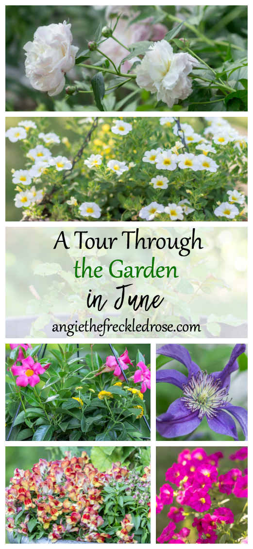 A Tour Through The Garden In June | angiethefreckledrose.com