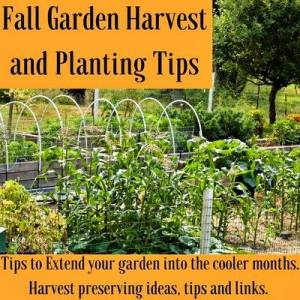 Fall Garden Harvests and Planting Tips - Homemade Food Junkie