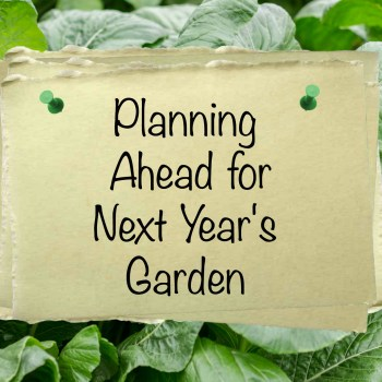 Planning Ahead for Next Year's Garden | angiethefreckledrose.com