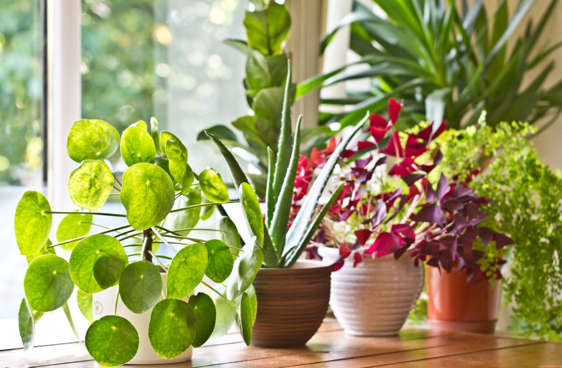 Finding Houseplants Online: Buying, Swapping, Gifting