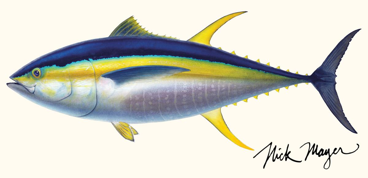 Yellowfin Tuna - Alpha Predator - Anglers Journal - A ...