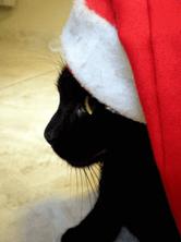 Scaramouche Noel