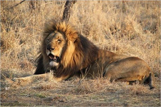African Safari 3D - 5