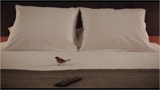 Bird people - 4