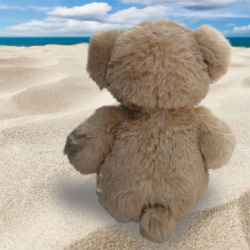 Hope Bear at Beach_cropped