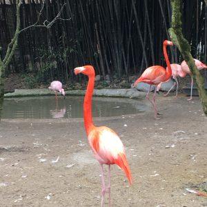 Parco Faunistico Cappeller: Animali, Dinosauri e Museo