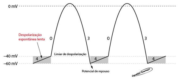 Potencial-do-nó-sinusal