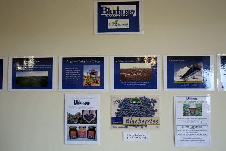 Blueberry Country 06
