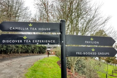 Zealong Tea Estate (Hamilton, New Zealand) 2