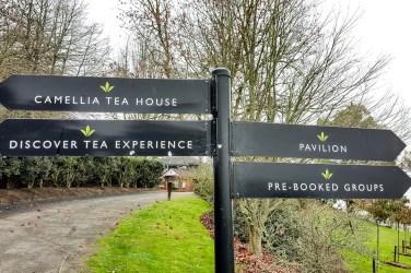 Zealong Tea Estate (Hamilton, New Zealand) 2