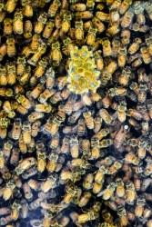 Arataki Honey 07