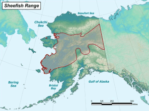aniak_sheefish_range