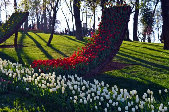 Tulips in Emirgan Korusu