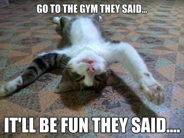gimnasio cansancio gato
