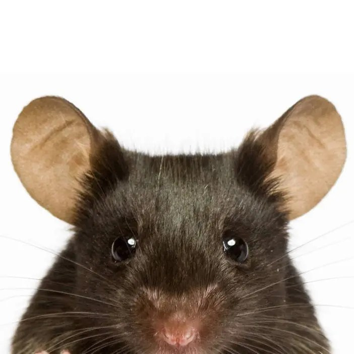The Ethical Use of Laboratory Animals in Research - Centre Scientific Neuroscience - 24